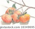 秋之美食 水果 水彩 16349695