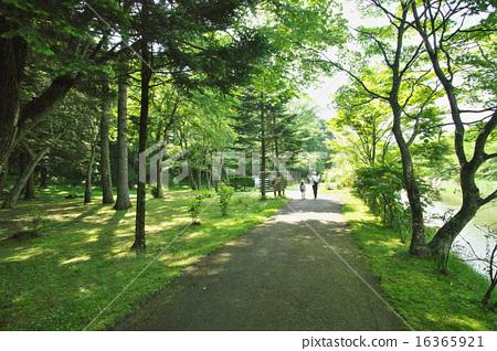 Walk in fresh green 16365921