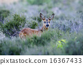 mammal, wildlife, fauna 16367433