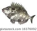 물고기, 바리케이드, 바위해변 16376092