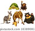 Animals 16389081