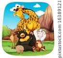 Animals 16389121