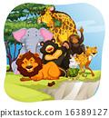 Wildlife 16389127
