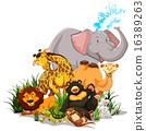 Wildlife 16389263