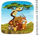 Safari 16389449