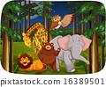 Wild animals 16389501