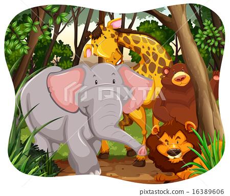 Wildlife 16389606