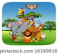 Animals 16389616