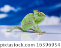 Chameleon on the blue sky, bright vivid exotic  16396954