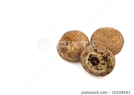 Isolated of Portobello Mushroom 16398681