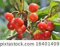 cherry, cherries, fruits 16401409