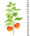 水彩 水彩畫 植物人 16418931