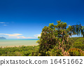 Tropical landscape over jungle and hills 16451662