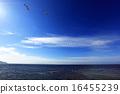 北海道半島03 16455239