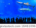 Churaumi Aquarium whale shark 16461096