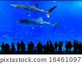 美麗海水族館 剪影 鯨鯊 16461097