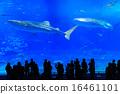 美麗海水族館 剪影 鯨鯊 16461101