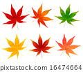 maple yellow leafe 16474664