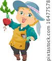 harvest, beet, woman 16477578