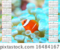 흰동가리, 바닷물고기, 달력 16484167