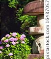 พืชไม้ดอกขนาดใหญ่ 16487057