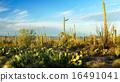 Saguaro National Park 16491041