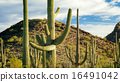 Saguaro National Park 16491042