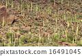 Desert Landscape 16491045