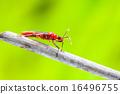 beetle 16496755
