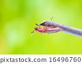 beetle 16496760