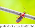 beetle 16496761