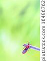 beetle 16496762