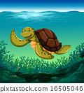 乌龟 插图 珊瑚 16505046