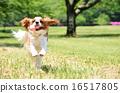 騎士 奔跑 跑步 16517805