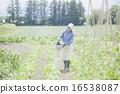 females, edamame, field 16538087
