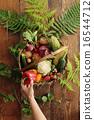 有機蔬菜 夏令時蔬 夏季蔬菜 16544712