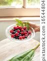 覆盆子 樹莓 藍莓 16544804