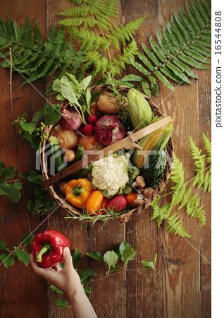 夏季蔬菜拼盤 16544808
