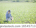 edamame, female, lady 16545713