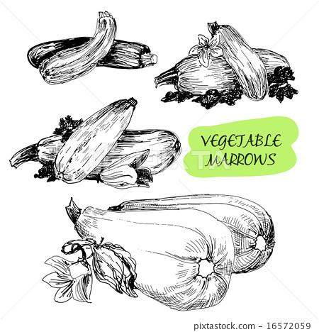 Vegetable marrows 16572059