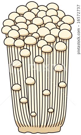 Enoki mushroom 16572737