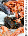 raw seafoods at kitchen sink 16580251