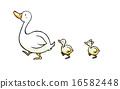 鴨子 鴨 雞 16582448