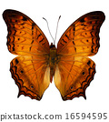 Common Cruiser butterfly 16594595