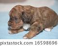 一隻小狗 16598696
