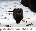 black cat sitting on a bed 16610413