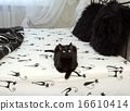 domestic cat sitting on a bed 16610414