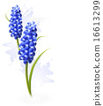 Nature background with blue flowers. Vector 16613299