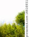 ต้นไม้ฤดูร้อน 16616931