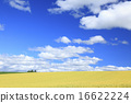 小麦地 广阔的 上富良野町 16622224